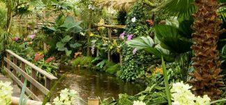 Orchideeënhoeve - Maleisische Tuin