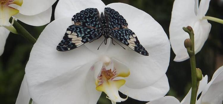 Orchideeënhoeve in Luttelgeest