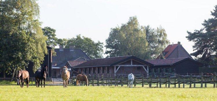 De pracht en praal van het Gooi en oude paarden - Vosseveld