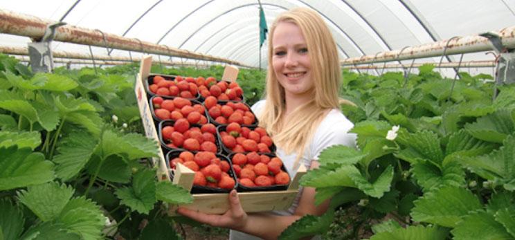 Bezoek aan Aardbeienterras, Basiliek Oudenbosch en Botanische tuin Arboretum